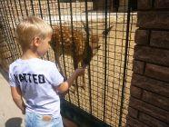 Зоопарк «Княжий ZOO»